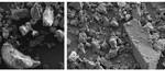Mikroplastik aus Peeling-Produkten (li.) und gemahlenes Karnaubawachs (re.) haben ähnliche Eigenschaften.
