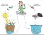 Der Weg von primärem und sekundärem Mikroplastik in unserer Nahrungskette.