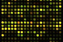 Mit Hilfe so genannter Microarrays können Wissenschaftler die Konzentration von Hunderten Molekülen, in diesem Fall von Mikro-RNA, gleichzeitig bestimmen. Jeder Punkt steht hierbei für ein Molekül, die Farbintensität wird durch die Konzentration bestimmt.   Bildrechte: Universitätsklinikum Freiburg