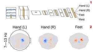 Um Hirnsignalen die richtige Bedeutung zuschreiben zu können, verarbeitet das künstliche neuronale Netz sie in mehreren Schichten (1). Eine Visualisierung des Effektes der Amplitude auf die Dekodierungsentscheidung des Netzes (rot: positiv, blau: negativ) zeigt den Forschenden, was der Algorithmus lernt (2).