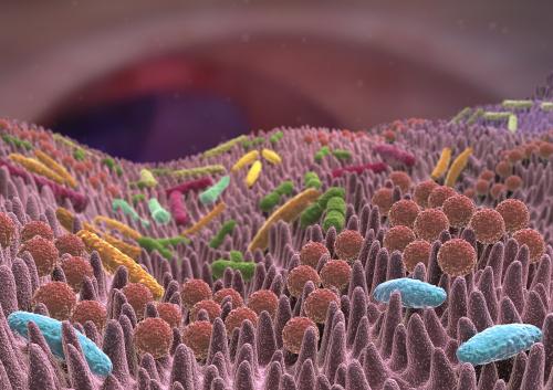 Die menschliche Darmflora ist ein eigener Mikrokosmos: Das so genannte Mikrobiom setzt sich aus mehr als eintausend verschiedenen Arten von Darmbakterien zusammen. Diese siedeln an den Wänden des Darms und in dessen Inneren. Sie sind für uns lebenswichtig: Die Darmflora ist wichtig für die Verdauung, die Abwehr von gefährlichen Keimen und Giften und die Funktionsfähigkeit des Immunsystems. Foto: Fotolia