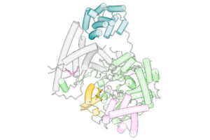 Schematische Darstellung des POLRMT-Inhibitor-Komplexes. © Hauke S. Hillen